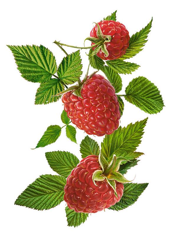 При упадке сил как витаминное и общеукрепляющее средство применяется отвар плодов малины: 20 г сухих ягод залить 200...